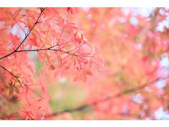 秋は美容と健康にいいものがたくさん☆